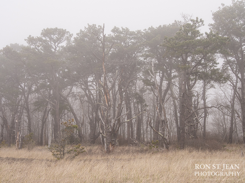 fine-art-photography-by-ron-st-jean-photography-laudholm-050816-018.jpg